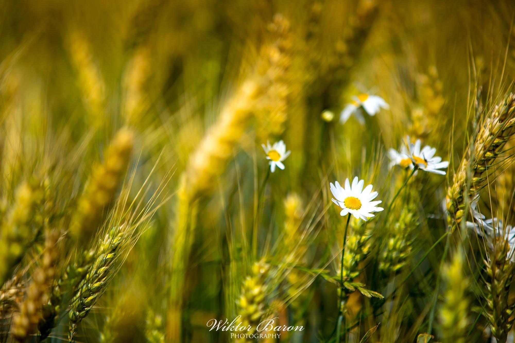 Fotografia Fauny i Flory