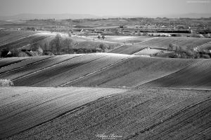 Łąki i pola na Ponidziu