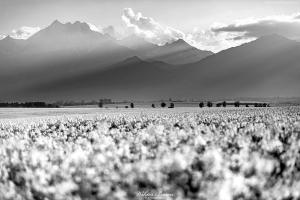 Tatry Wysokie w okolicach Spiskiej Białej