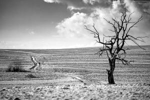 Drzewo w Sułoszowej