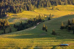 Łąki w Pieninach
