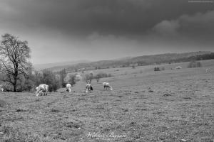 Pastwiska w Wyszowatce