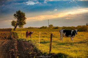 Pastwisko w okolicach Olecka