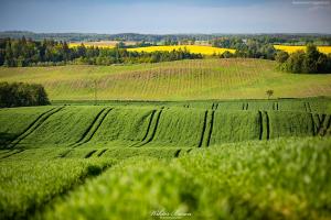 Pofalowane pola