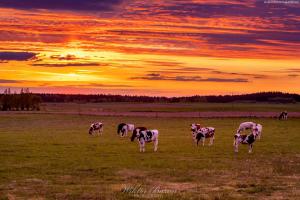 Pastwisko w okolicach Pisza