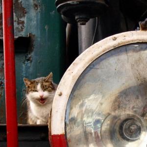 Kot który jeździł koleją ;)