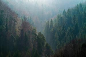 Górski Las