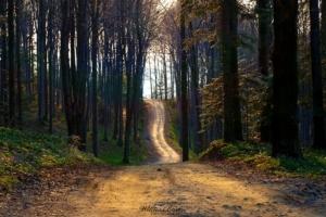 Droga do Limanowej