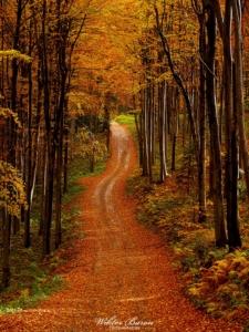 Jesienna Droga